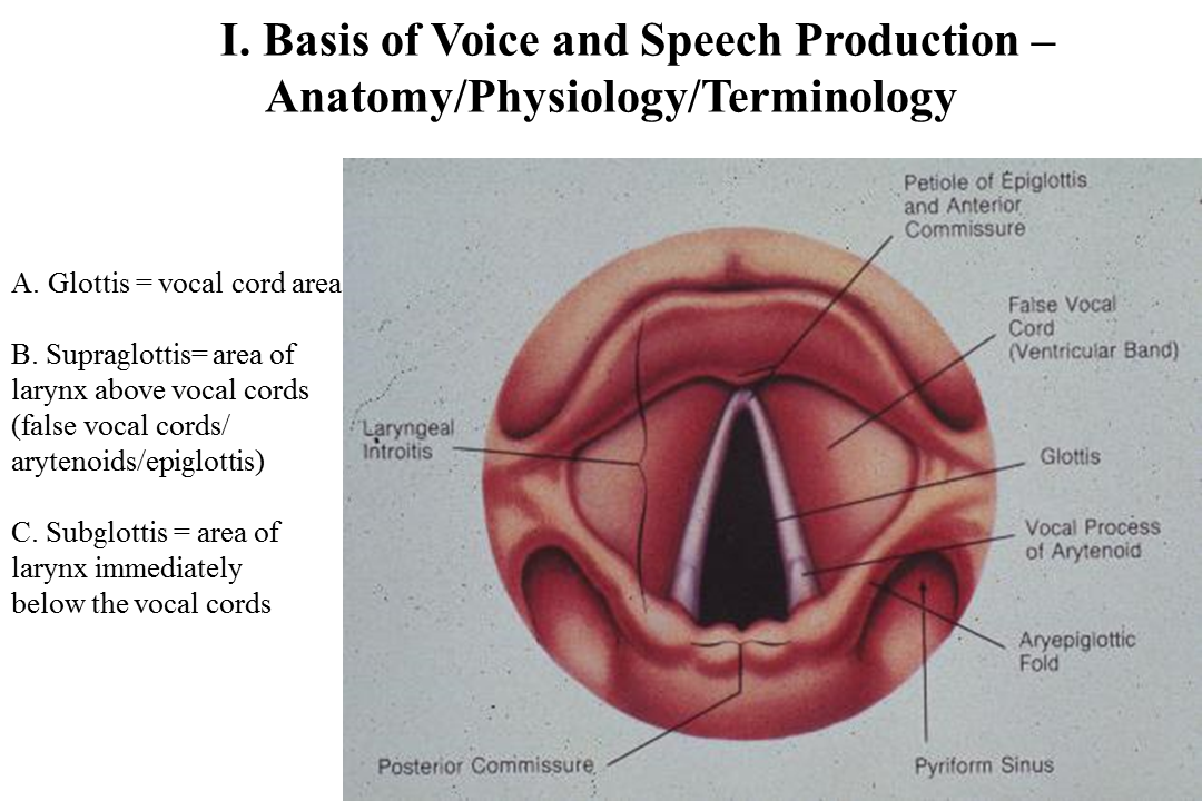 Common Voice Disorders Lecture July 7 2018 | Iowa Head and Neck ...