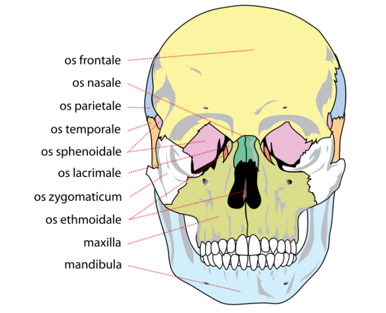 Facial Fracture Management Handbook Applied Anatomy Iowa Head