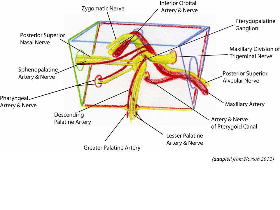 Juvenile Nasopharyngeal Angiofibroma (JNA) Anatomy: the ...