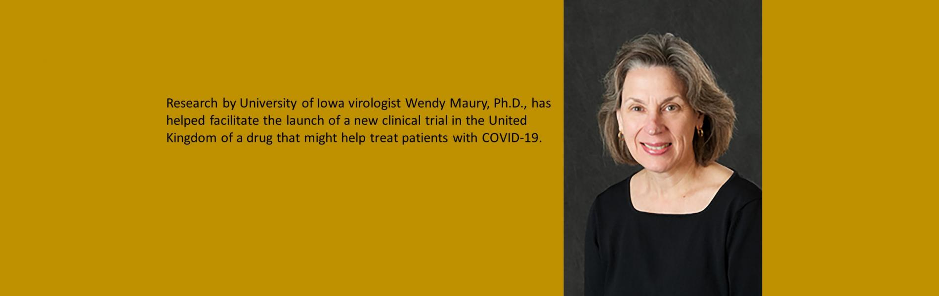 Wendy Maury: Research by University of Iowa virologist Wendy Maury, PhD, has helped facilitate the launch of a new clinical trial in the United Kingdom of a drug that might help treat patients with COVID-19.