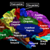 The medial (bottom) surface of the human cerebral cortex parcellated into 24 sub-regions.