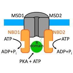 Discovery of complex regulation