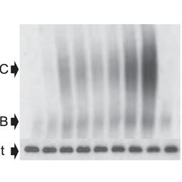 Genomic Signature Approach to Rescue ΔF508-CFTR